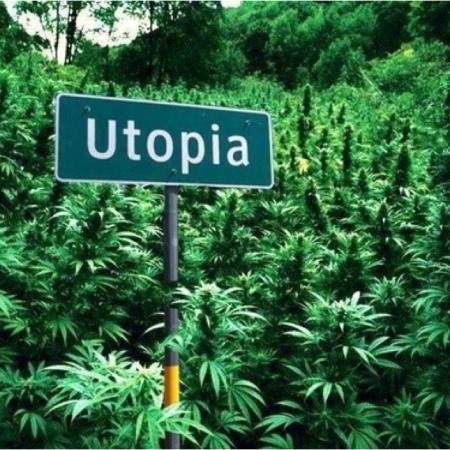 the4519, cannabis, ganja, pot, weed, marijuana